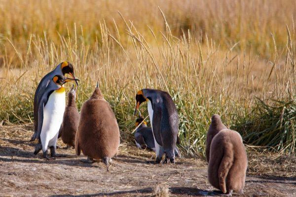 Parque Pinguino Rey