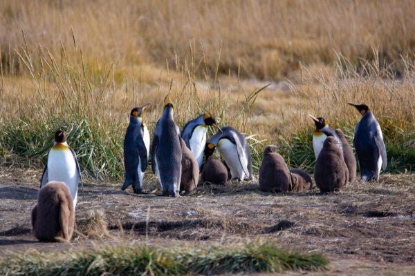 Как попасть в Parque Pinguino Rey