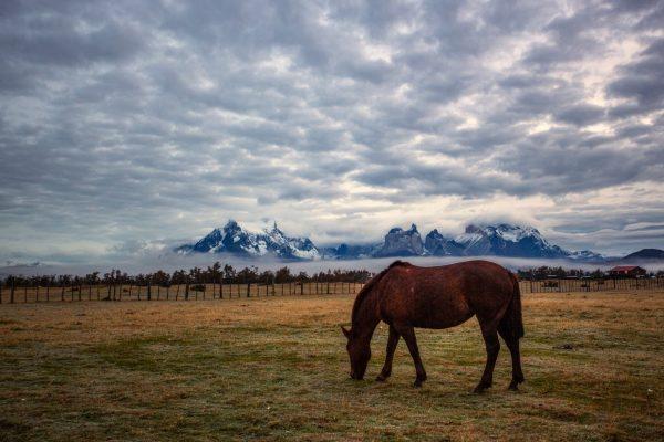Утро в парке Torres Del Paine