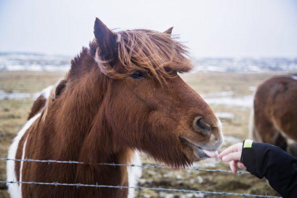 Первые лошадки