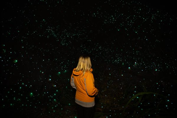 Hokitika Glowworm Dell